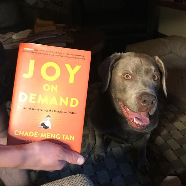 "Reading from ""Joy on Demand this eve, looking at my sweet Silver Lab, Sadie, when I read this line ....""Don't stop.  Don't strain'."" I laughed, felt joy, and realized that is Sadie's mantra. I think I will adopt it for my own mind .  Very appropriate after a full day of doing my own yoga practice, working on YoMIND website with the kind souls @pacificdomes and then spending the afternoon teaching YoMIND to middle school students.  Time for rest.  #dontstopdontstrain #itsokaytorest #perfectday #changetheworld #yomindmatters #yomind @yomindmatters @chademeng #kindnessisasuperpower #yomindeducationforall #lovemylab"