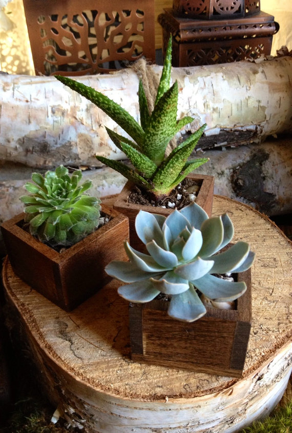 Succulent and Planter  - Etsy TheRedLilyShop.jpg