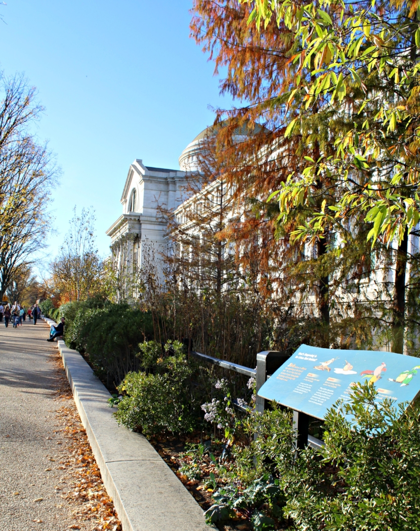 Museum - National Mall ed.jpg