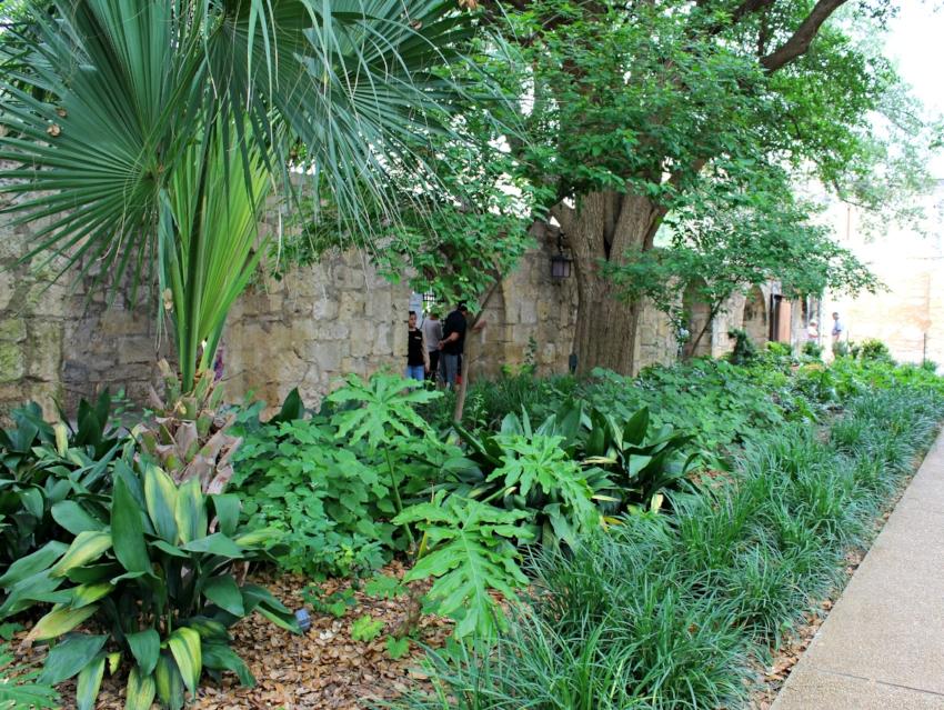 Alamo ed.jpg