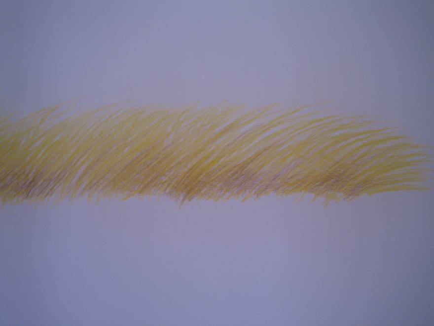 untitled, (grass)  color pencil on mylar over watercolor paper  18 x 20 in 2010