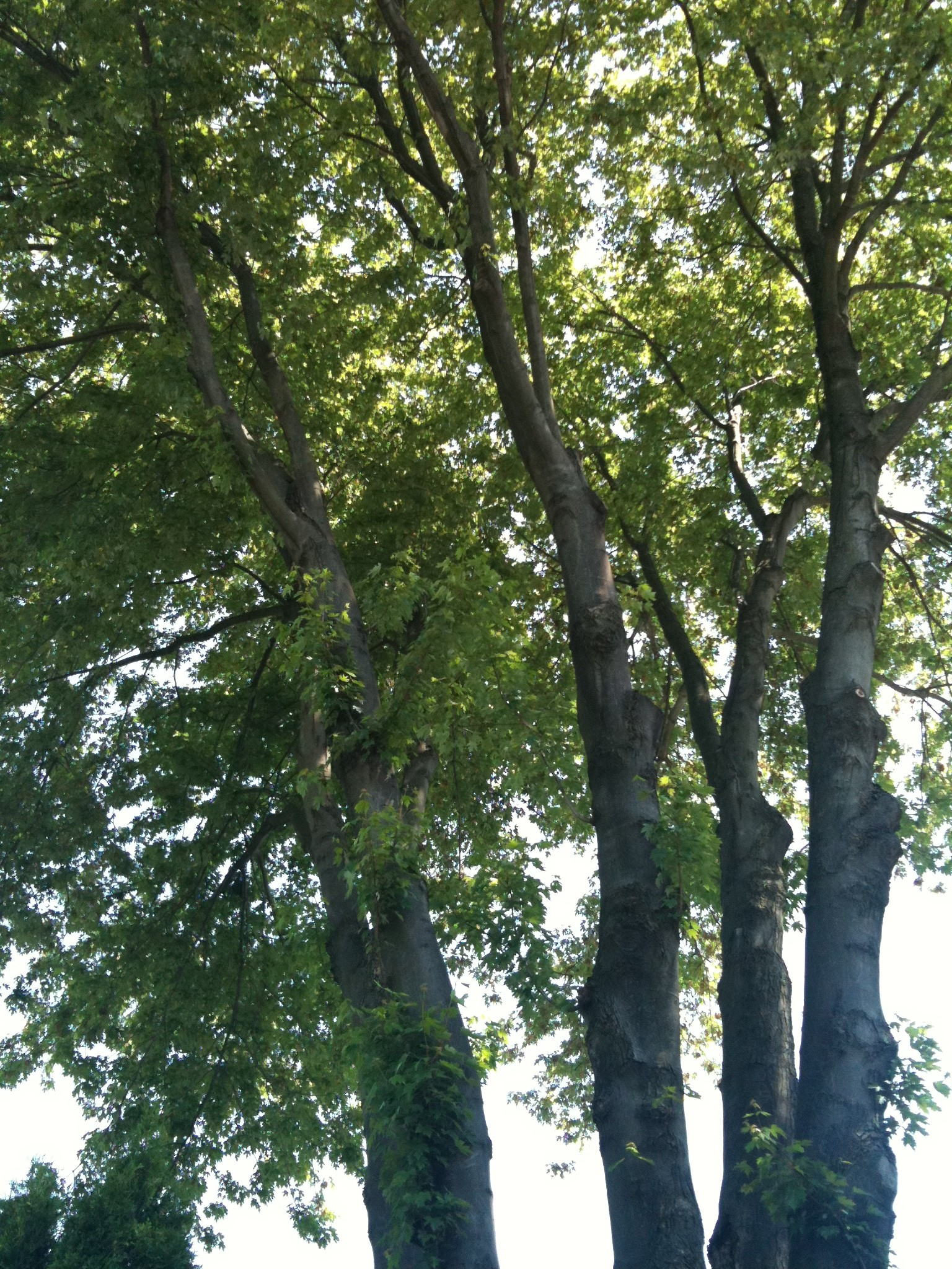 Trees on my walk