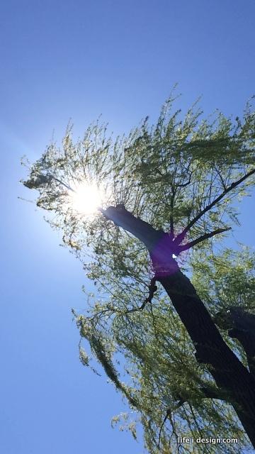 trees-001