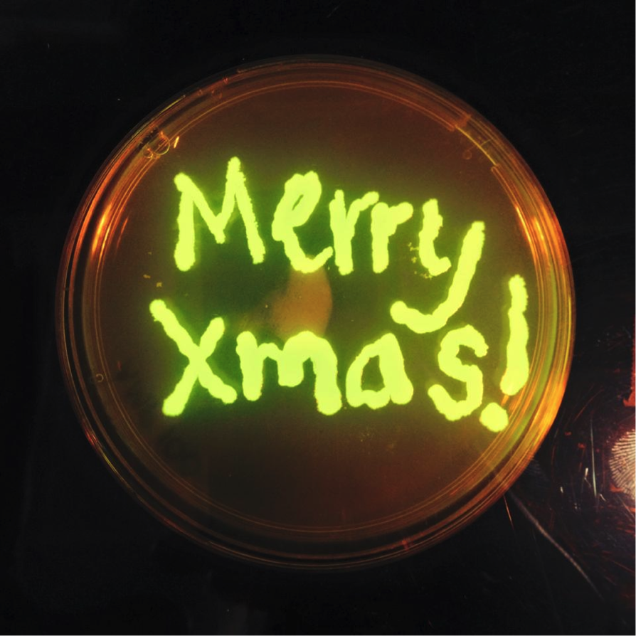 Merry xmas gfp.png