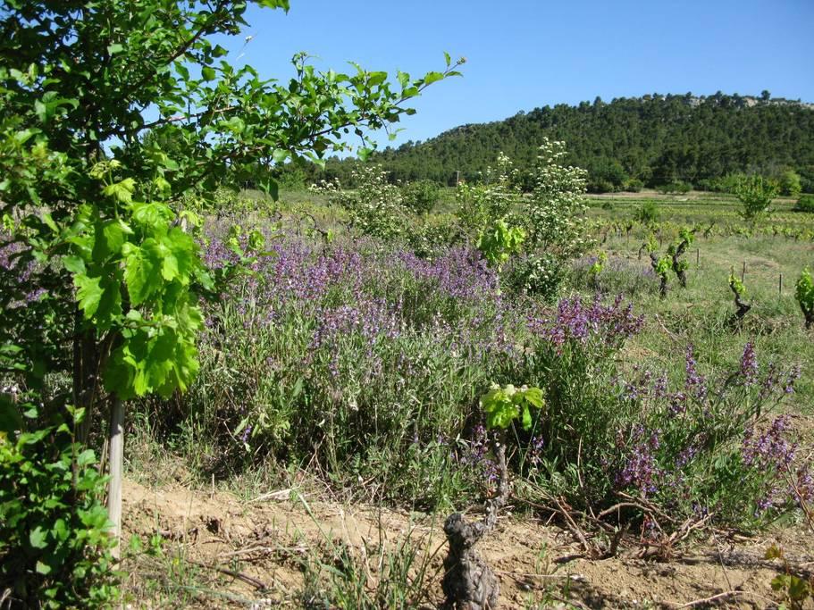 Le Cabanon des Elfes Provence France