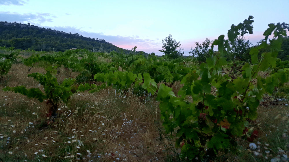 La Cabane du Monde Vineyard Provence.png