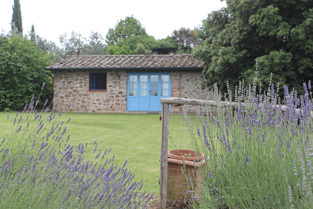 Maraviglia Lavender.png