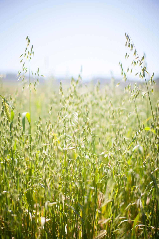 grass041616_0002.jpg