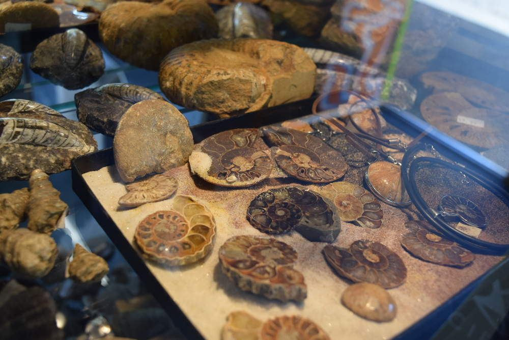 A selection of fossils compliment the gems and other natural wonders you can enjoy.
