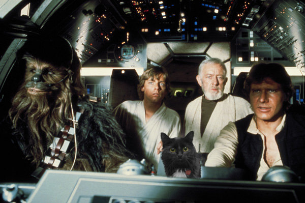 Did we mention the original  Star Wars  cast included a feline from the planet Awesome? Bear with us. We don't have a photo budget.