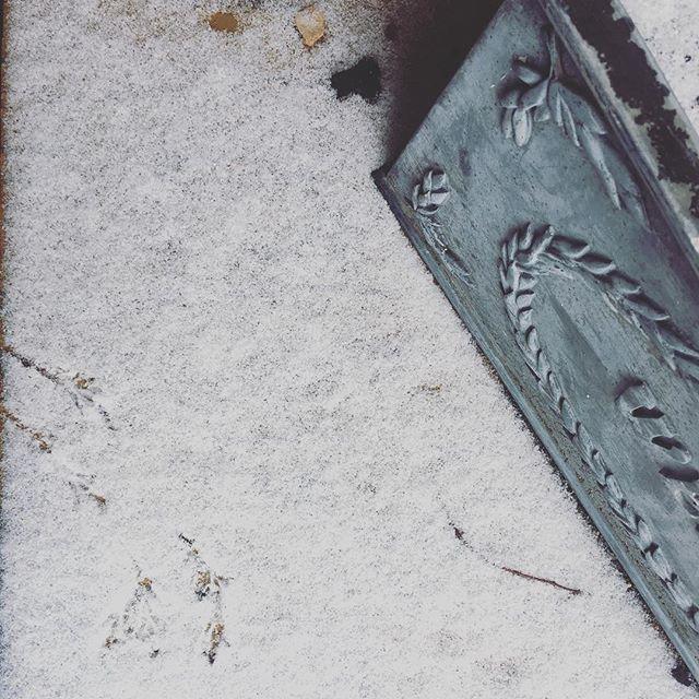 Footprints  #snow #snowinapril #bird #birds #spring #springsnow #evanston #chicagoland #northshore #birdsteps
