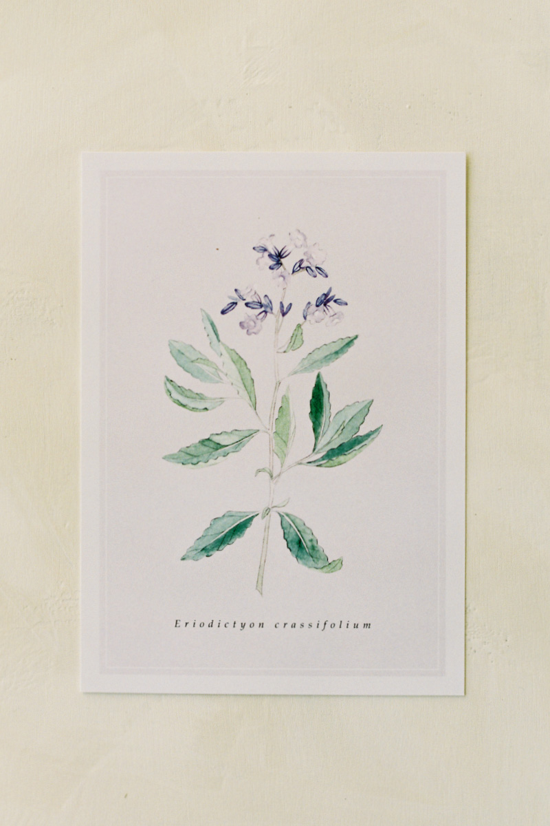 melanieosoriophotography_Watercolor-Botanical-Illustration_California-Native-Plants_Postcard_Yerba-Santa_Eriodictyon-crassifolium