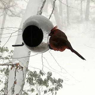 1 bird on feeder.JPG