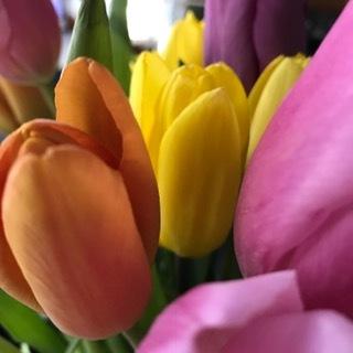 yel,or,pk tulips.JPG