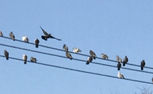 birds on wire.jpg
