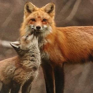 foxen.JPG