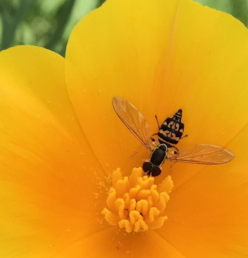 bug in flower.jpg