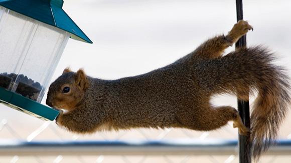 squirrel+on+pole.jpg