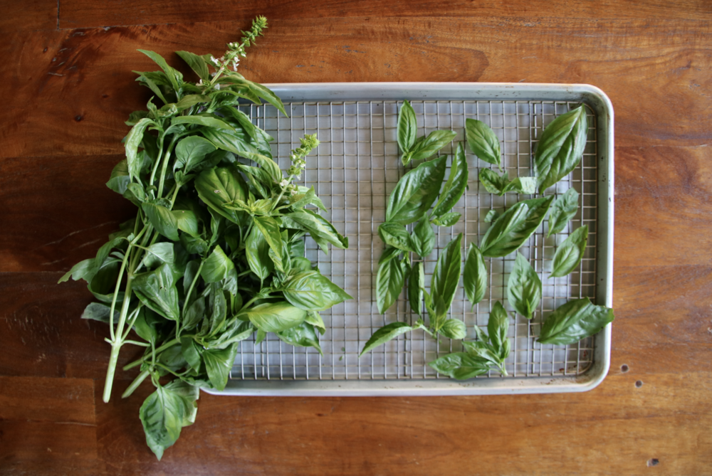 DIY dried summer herbs | Litterless