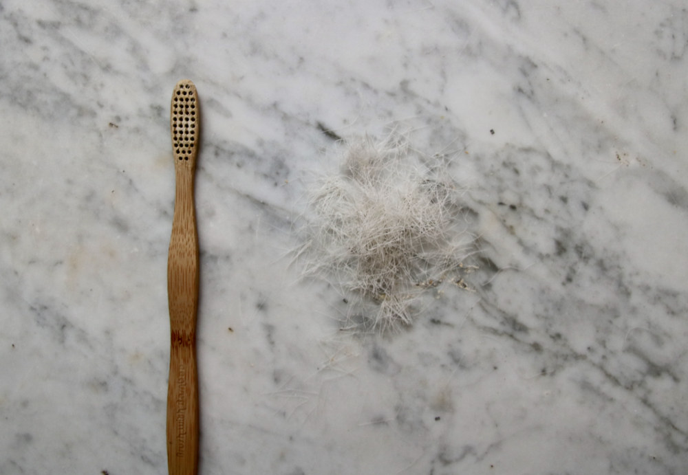 How to remove the bristles from a compostable bamboo toothbrush | Litterless