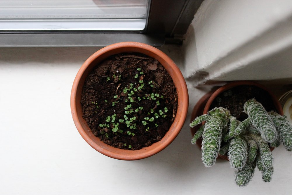 Windowsill garden | Litterless