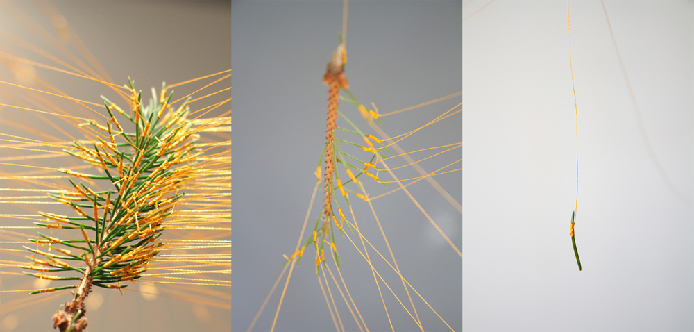 Ying Zhu, No Strings Attached, detail, 2012, pine branch, thread, tack, 39 x 19 x 9,  As the branch dries, the needles start to fall off.