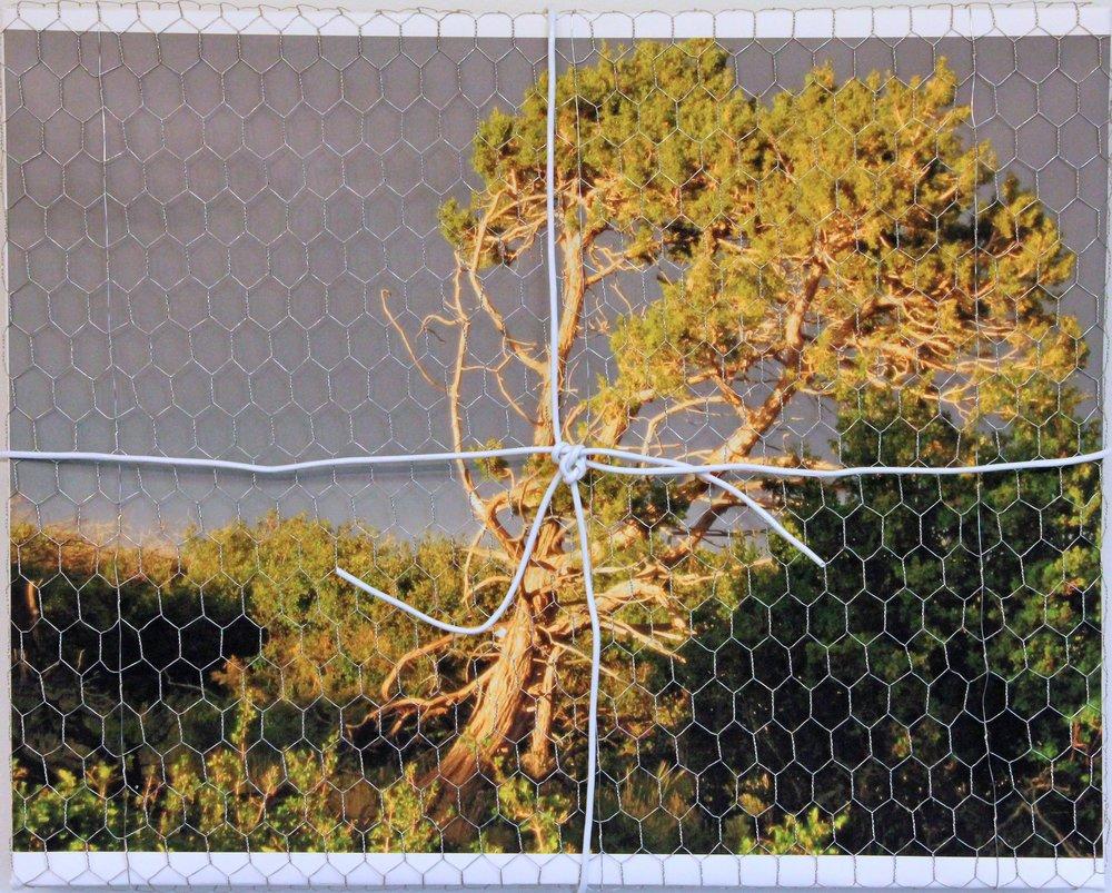 20_Stoic Tree, Mesa Verde.jpg