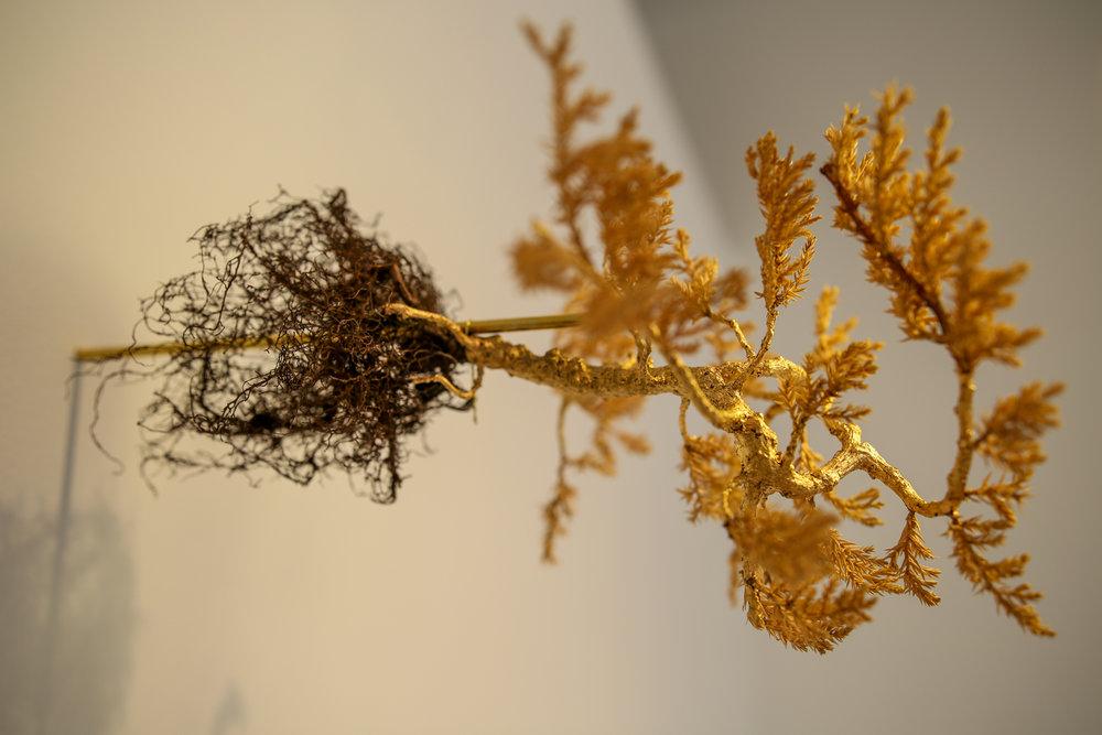 Ying Zhu,  Jasper , 2017, bonsai, gold leaf and brass rod, 6 x 12 x 14 inches, photo credit: Jared Kennedy