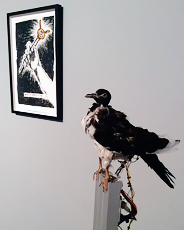 """Ting-Tong Chang, """"Black Pigeon, 2016, taxidermic pigeon skin,3-Dprinted mechanism, servos, electronic components, aluminium, and """"Apocachopstick,"""" 2015, Ink and watercolor on pap"""