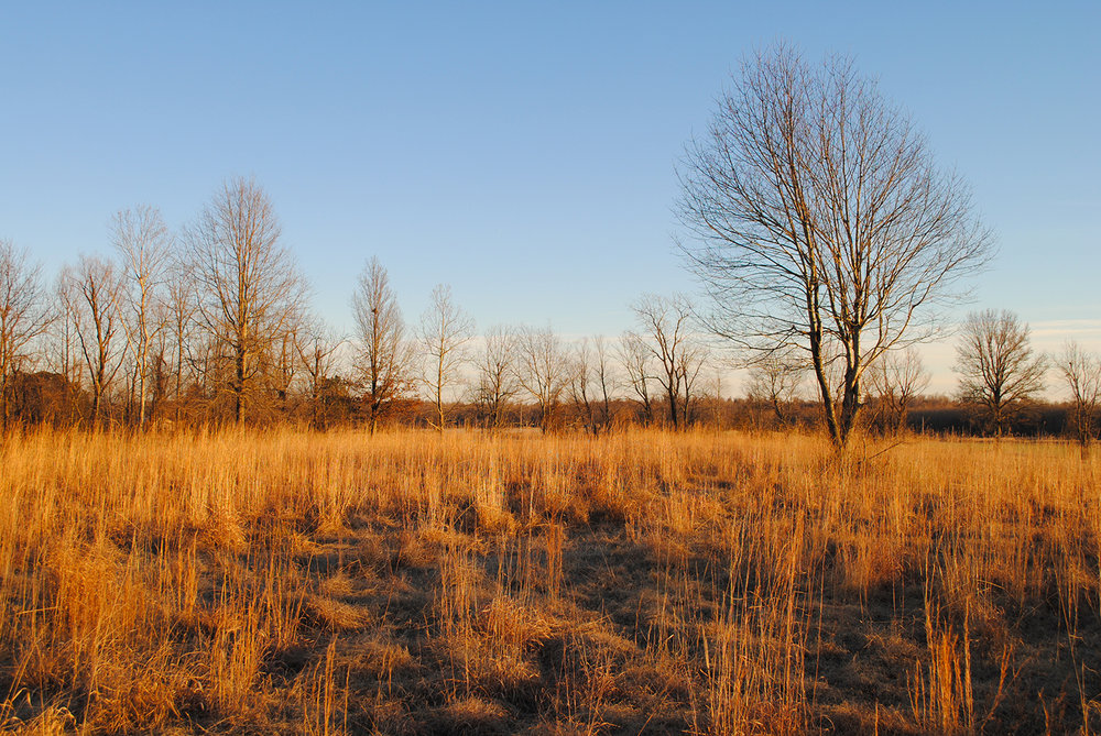 While the prairie at my grand-parents house is long gone, seeing grasslands like this one basking in the glow of sunset brings back memories of my childhood prairie rambles.