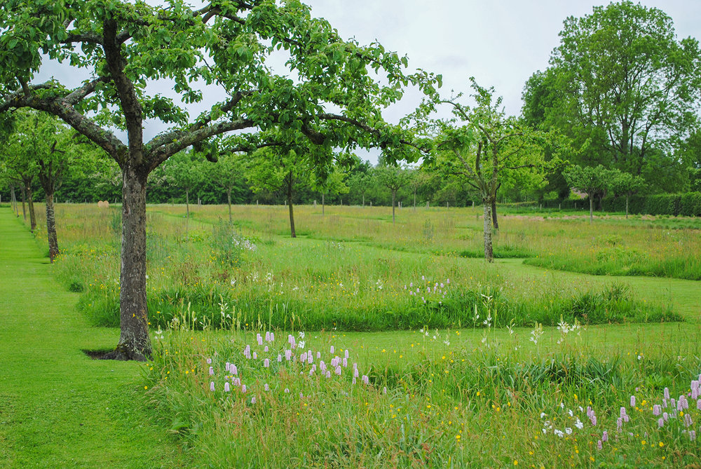 The meadow squares utlized the matrix planting style where lower growing grasses and forbs provide a backdrop for other wildflowers and seasonal interest plants to pop out against.