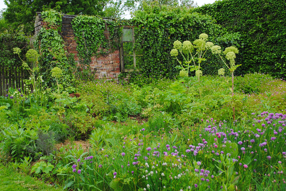 A ruin serves as a backdrop for herbaceous plants like Angelica (angelica) and Allium schoenoprasum (chives).