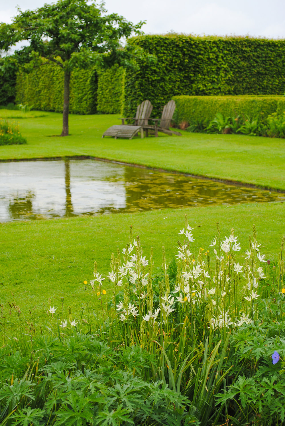 An apple tree is reflected in one of the small square ponds at Le Jardin Plume.  White Camassia (camas) flowers in the forefront.