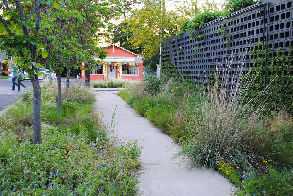 Nature and city life intersect at this designed plant community at the crossroads of Elizabeth Street and South First Street in Austin, TX.  Note the scattered  Lupinus texensis  filling in around tussock-type grasses.