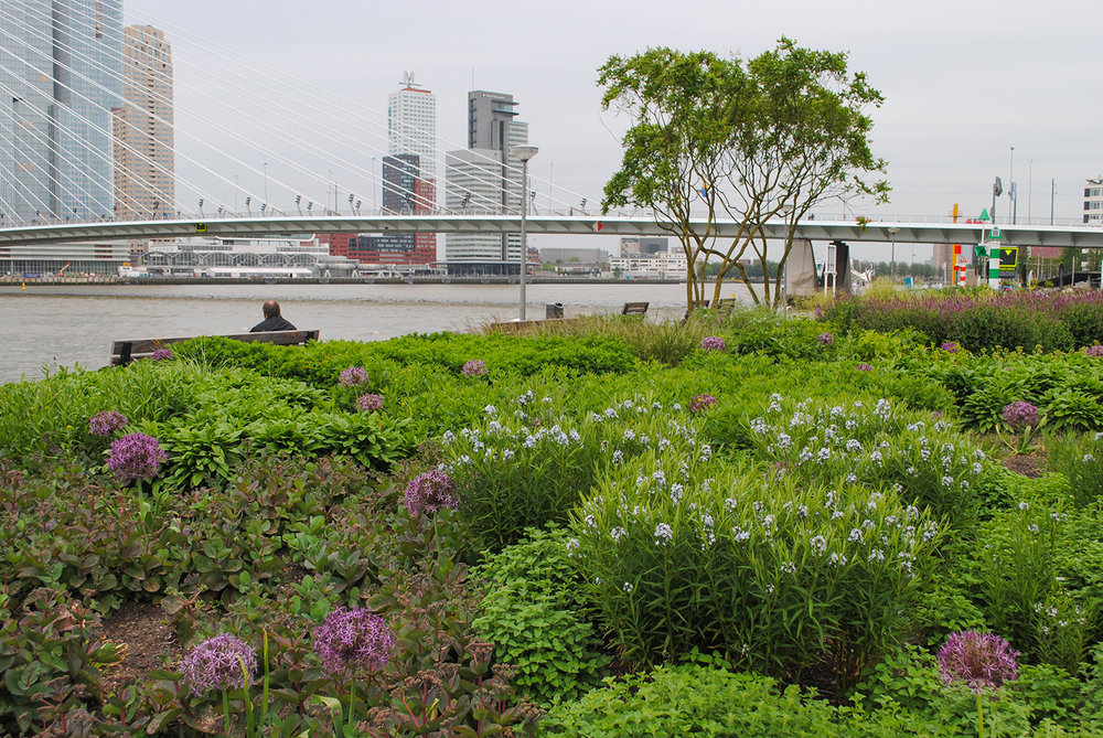 I made a special point to visit this park in Leuvehoofd in Rotterdam at a conference in the Netherlands a few years ago.  It was the first Oudolf installation I ever saw, and it was enlightening seeing plants intermingled.
