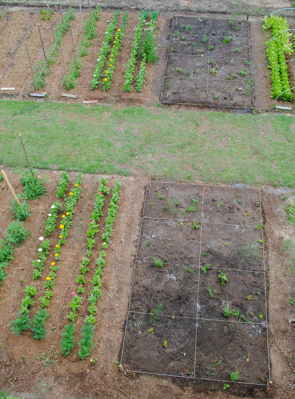 Photo from the end of day 1.  From this overhead shot of two food prairies in the midst of our cut flower and vegetable beds you can appreciate how the grid system helps students visualize where plants go.