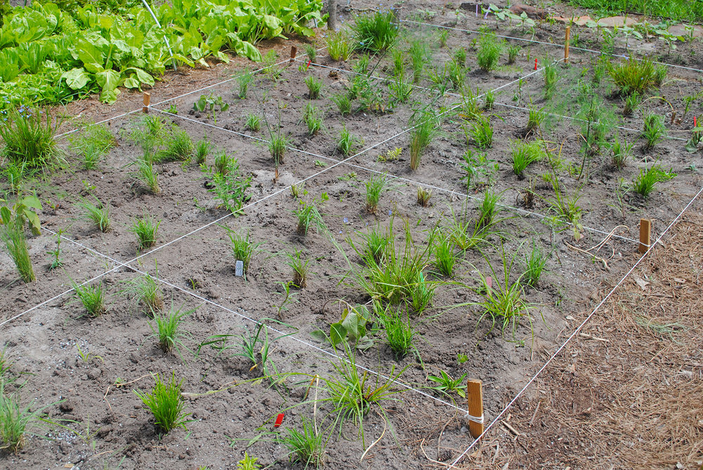Wa-hoo!  The food prairies are planted!