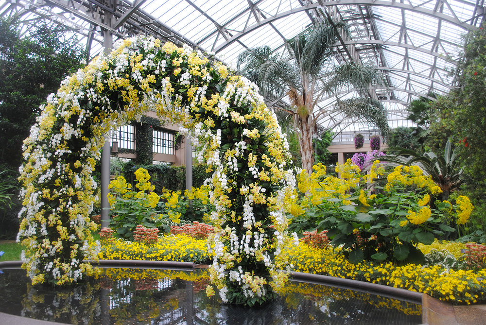 We visited during  Orchid Extravaganza , and per Longwood standards, everything looked stellar including this 12-foot-tall arch covered in  Phalaenopsis  orchids.