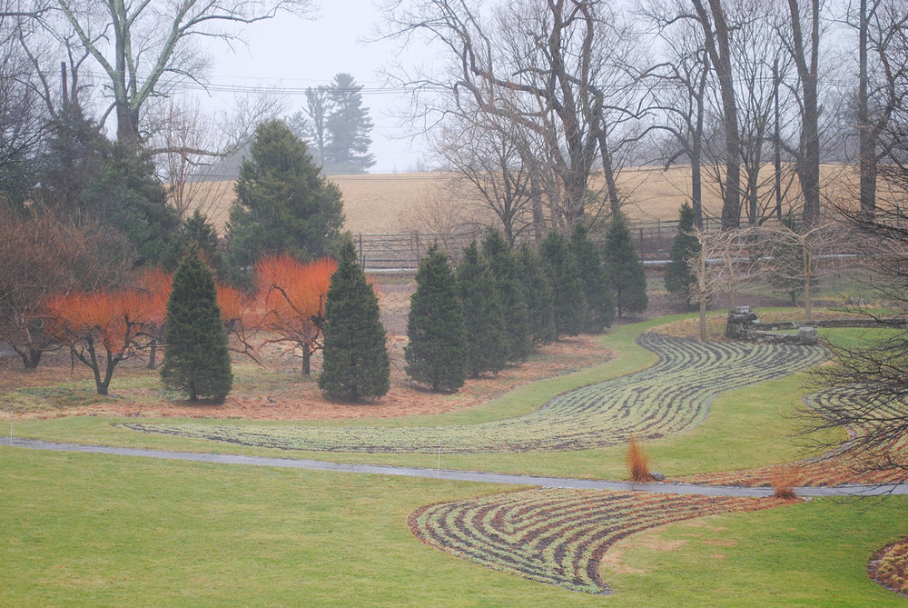 The serpentine plays homage to the agriculture crops grown in the Pennsylvania countryside and features a different crop each year.  Even from a distance you can make out the bold curves of the bed.