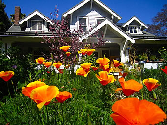 kingsley_poppies