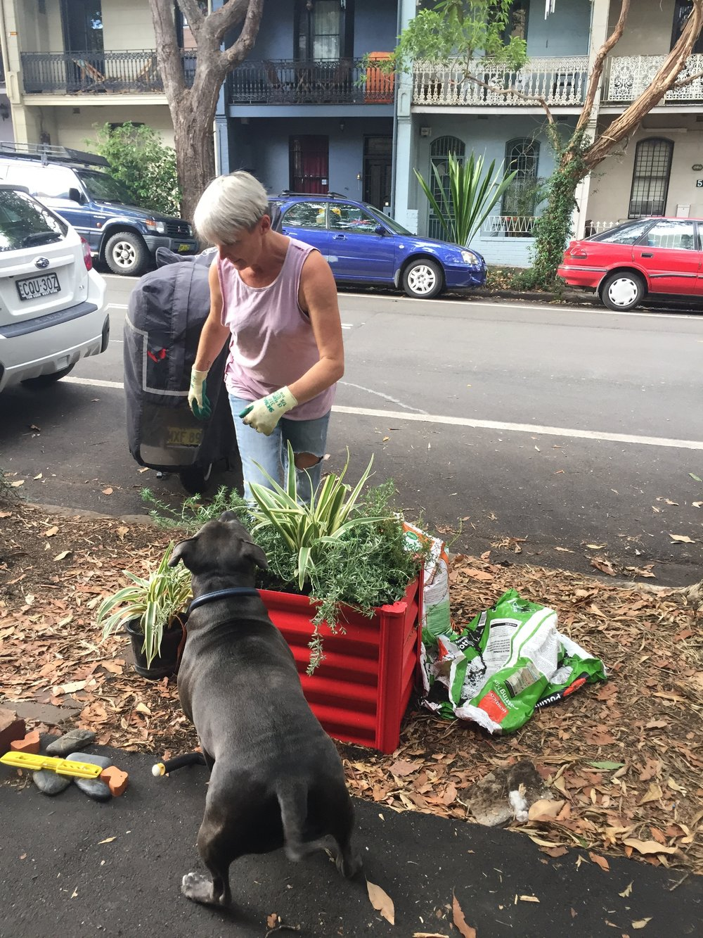 • A Chippendale road garden under construction with a mix of compost and imported soil