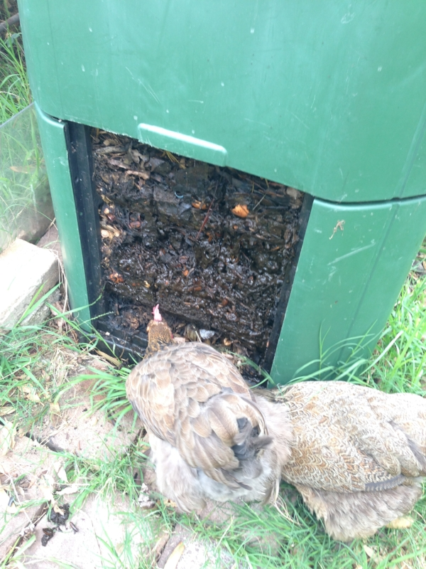 •  Chooks love compost
