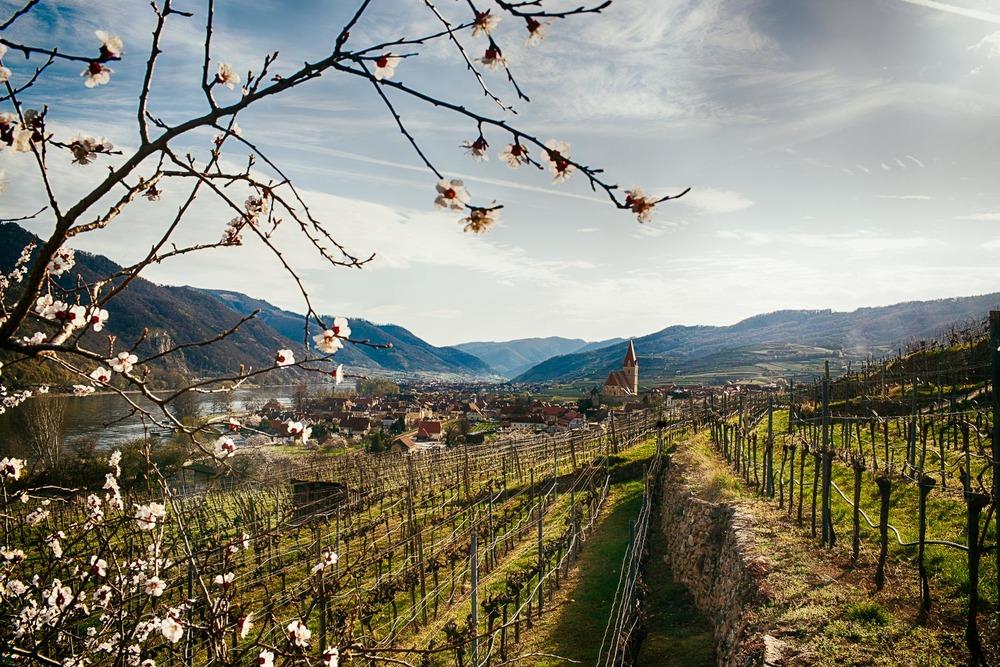 Frühlings in Weißenkirchen in der Wachau