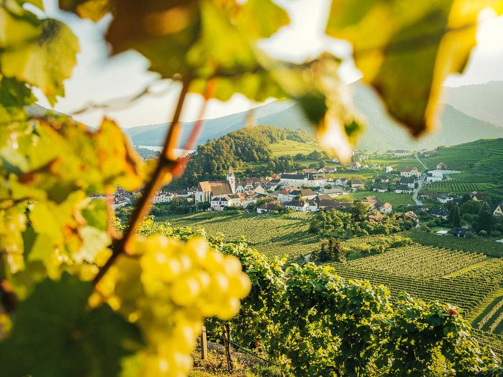 Landschaftsfotos - Sommer in der Wachau © Florian Schulte-15.jpg