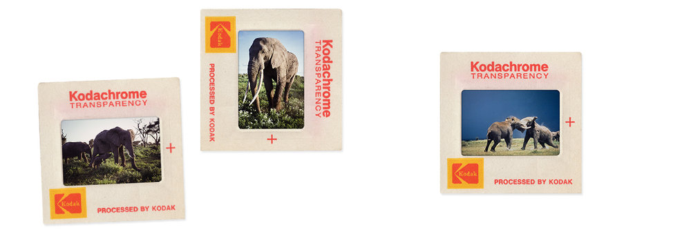 These Kodak slides were used throughout the film and were taken by Roger in Africa in the early 70's.