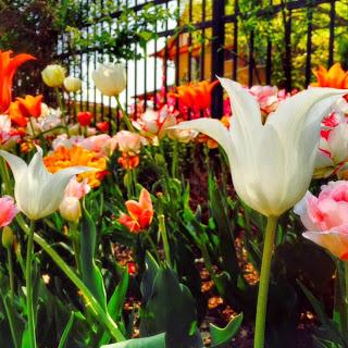 centennial garden.JPG