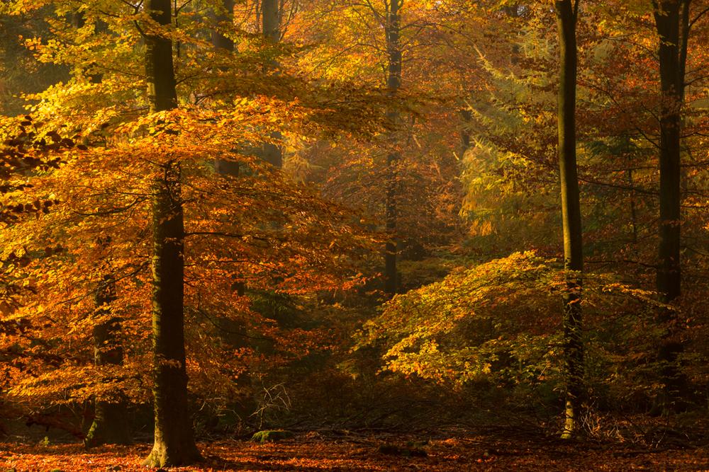 Herfstkleuren, Speulderbos