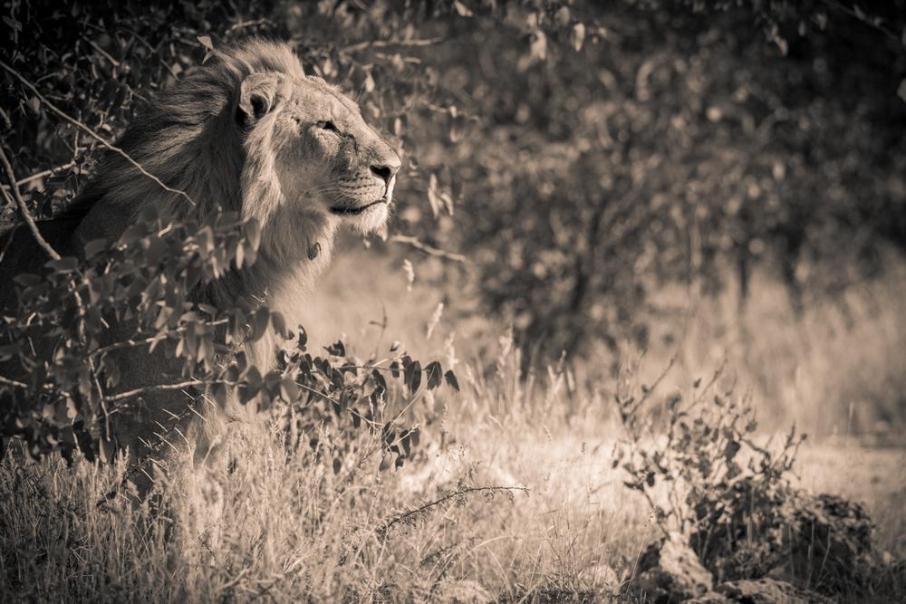 King of the Bush, Namibie