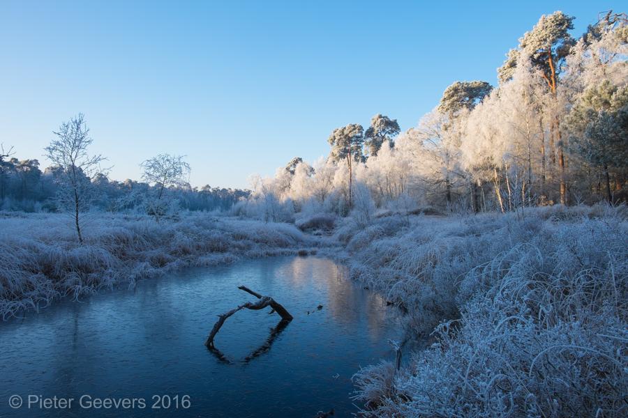 Winter blues, Oisterwijk 2016