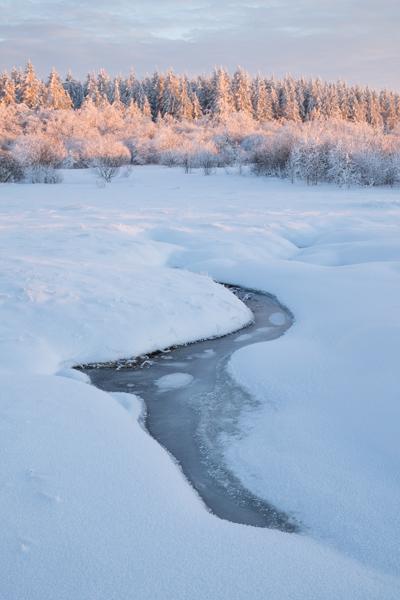 Frozen stream, Ardennes